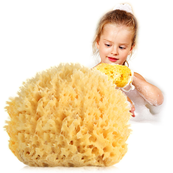 TOSOWOONG_Natural_Sponge_Honey_Comb_Jumbo_1233